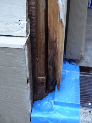 Dry Rot Wood